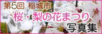 第5回稲城市 桜・梨の花まつり写真集