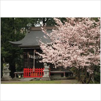 春の装い.竪神社