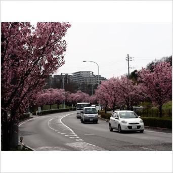 初春の走り