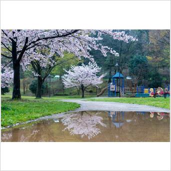 大丸公園 春の静寂